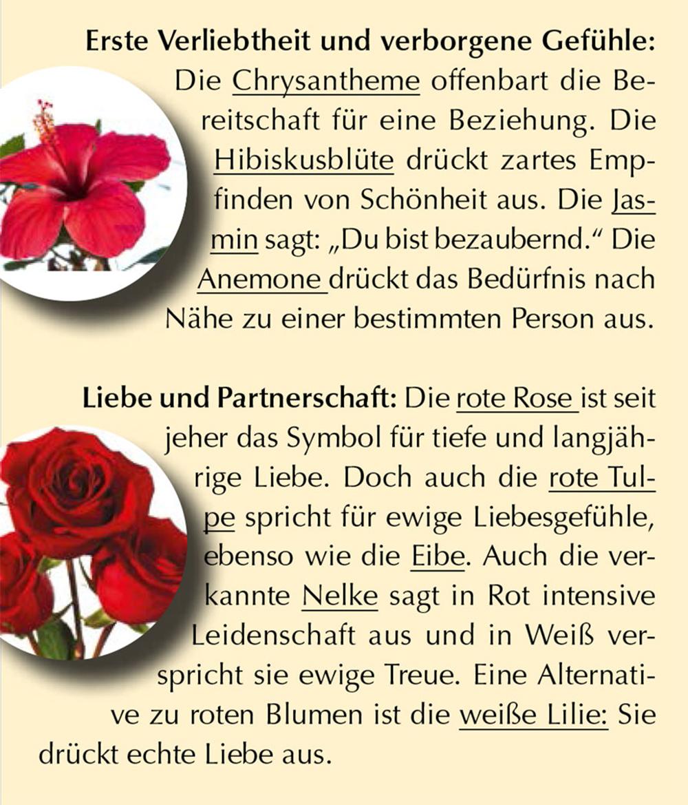 Sags Mit Blumen Wifi Blog Wien