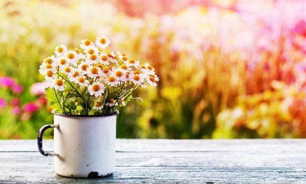 Sag's mit Blumen!
