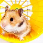Ausgebrannt! – Raus aus dem Hamsterrad