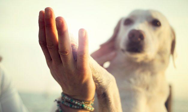 Tiere helfen heilen